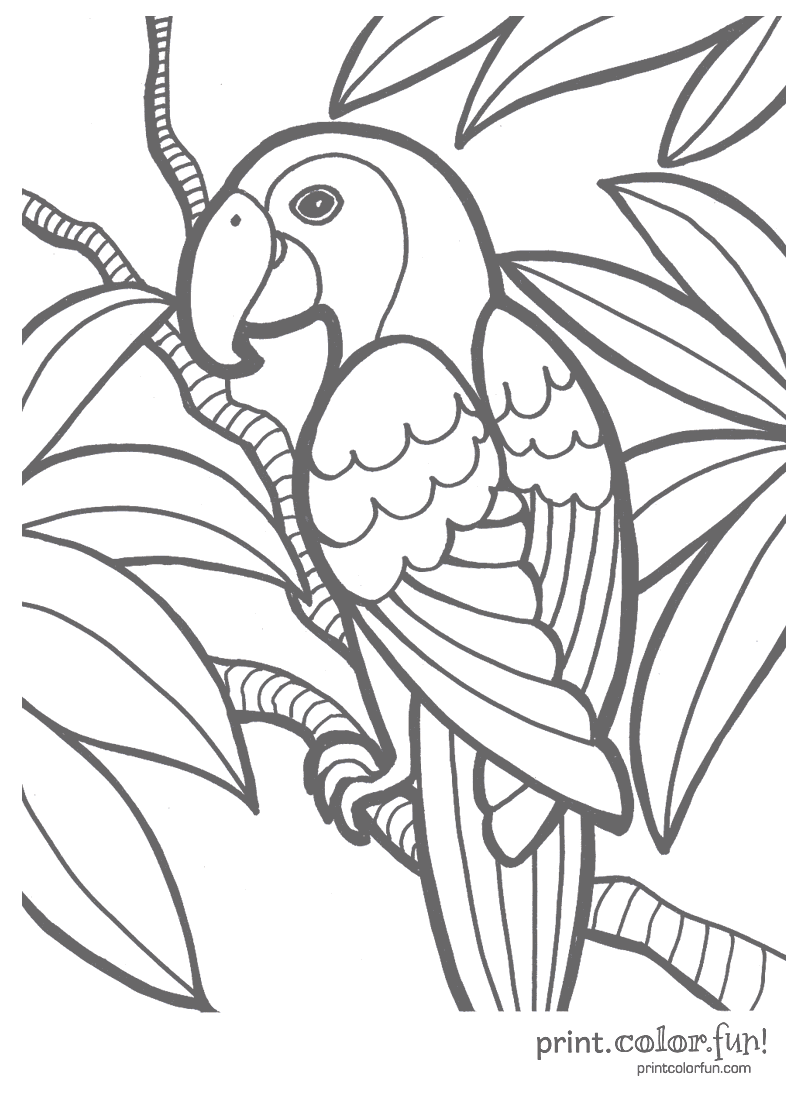 800x1100 Parrot Print. Color. Fun! Free Printables, Coloring Pages
