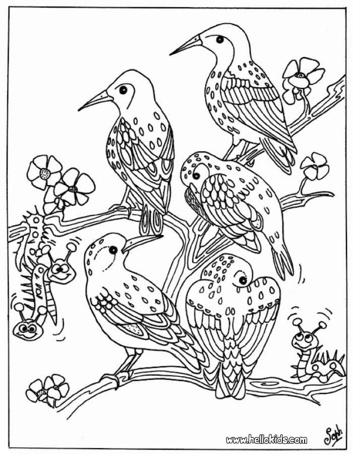 700x900 Printable Coloring Pages Birds