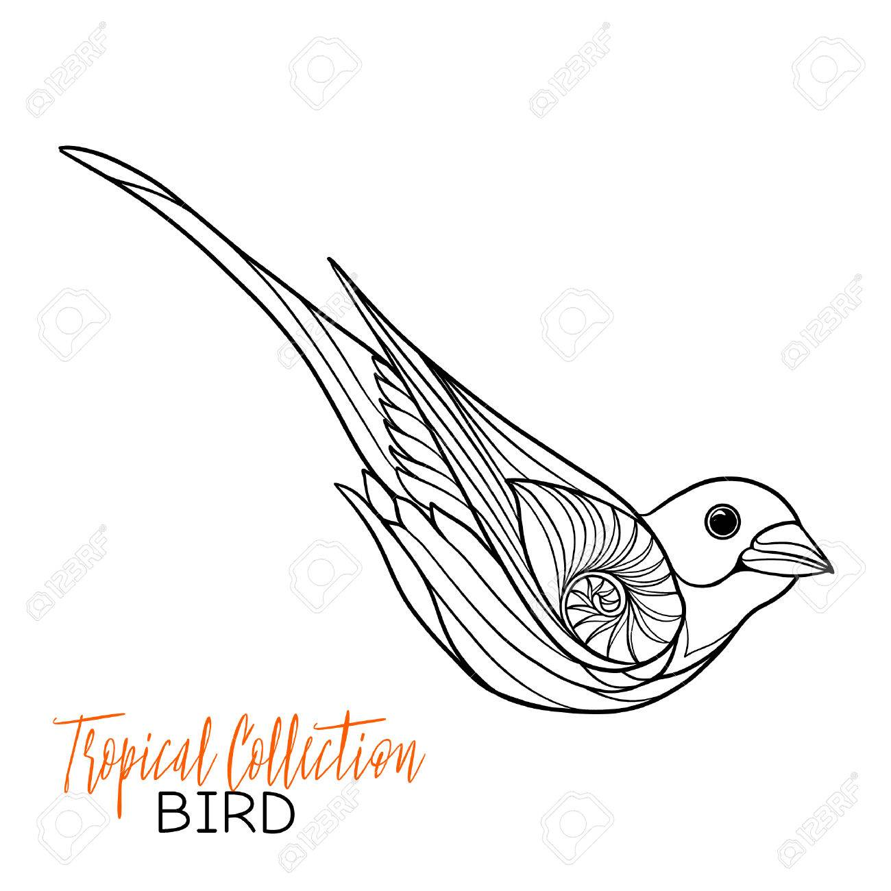 1300x1300 Tropical Bird. Vector Illustration. Coloring Book For Adult