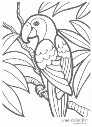 309x425 Tropical Parrot Coloring Page