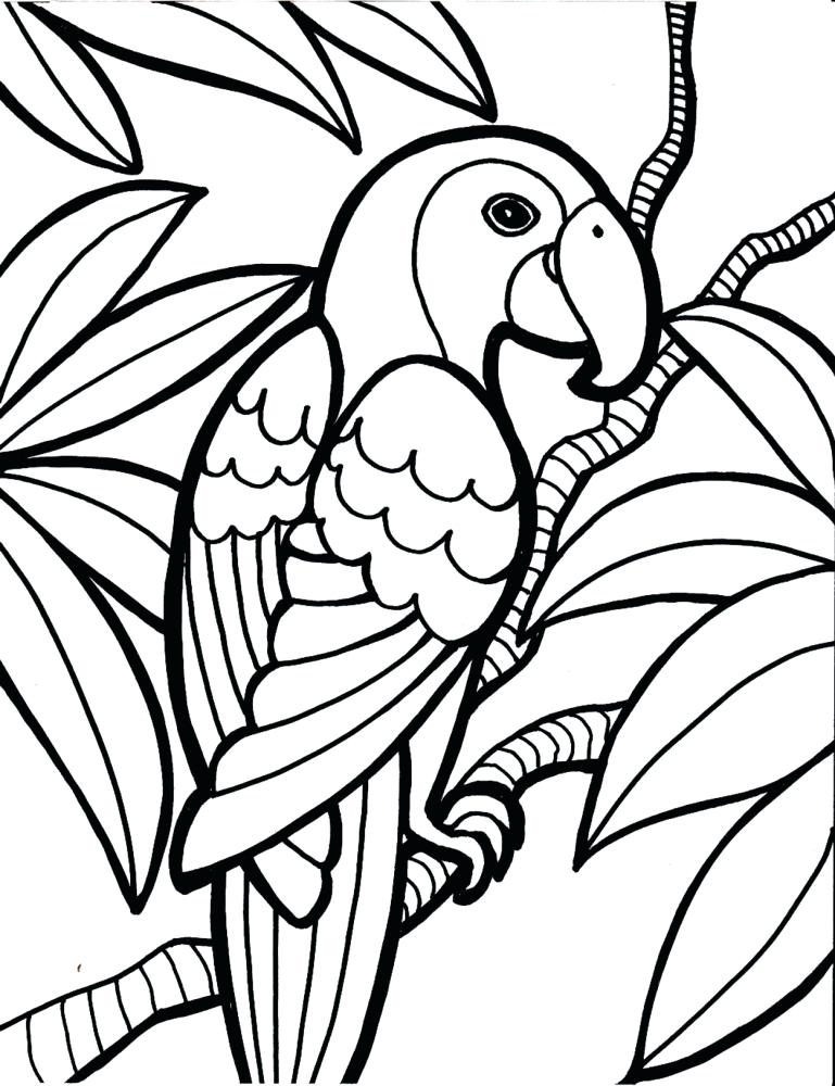 769x1000 Awesome Parakeet Coloring Pages Free Download Bird For Kids Page