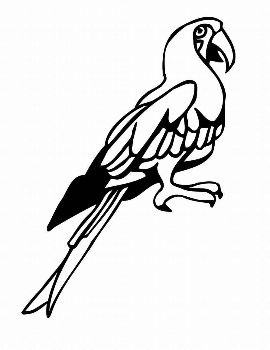 893x1155 Birds Coloring Pages