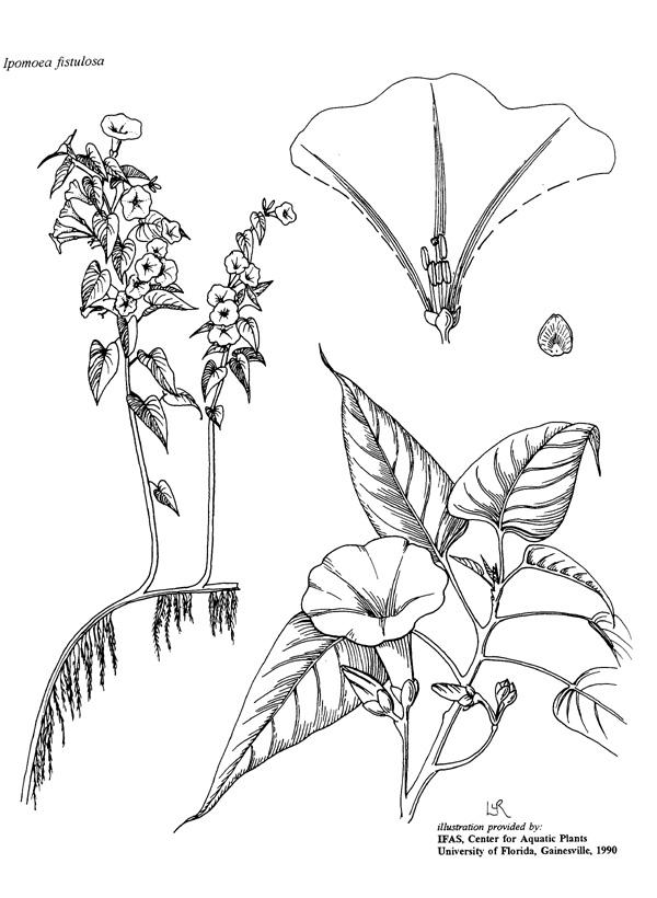 600x820 Drawn Rainforest