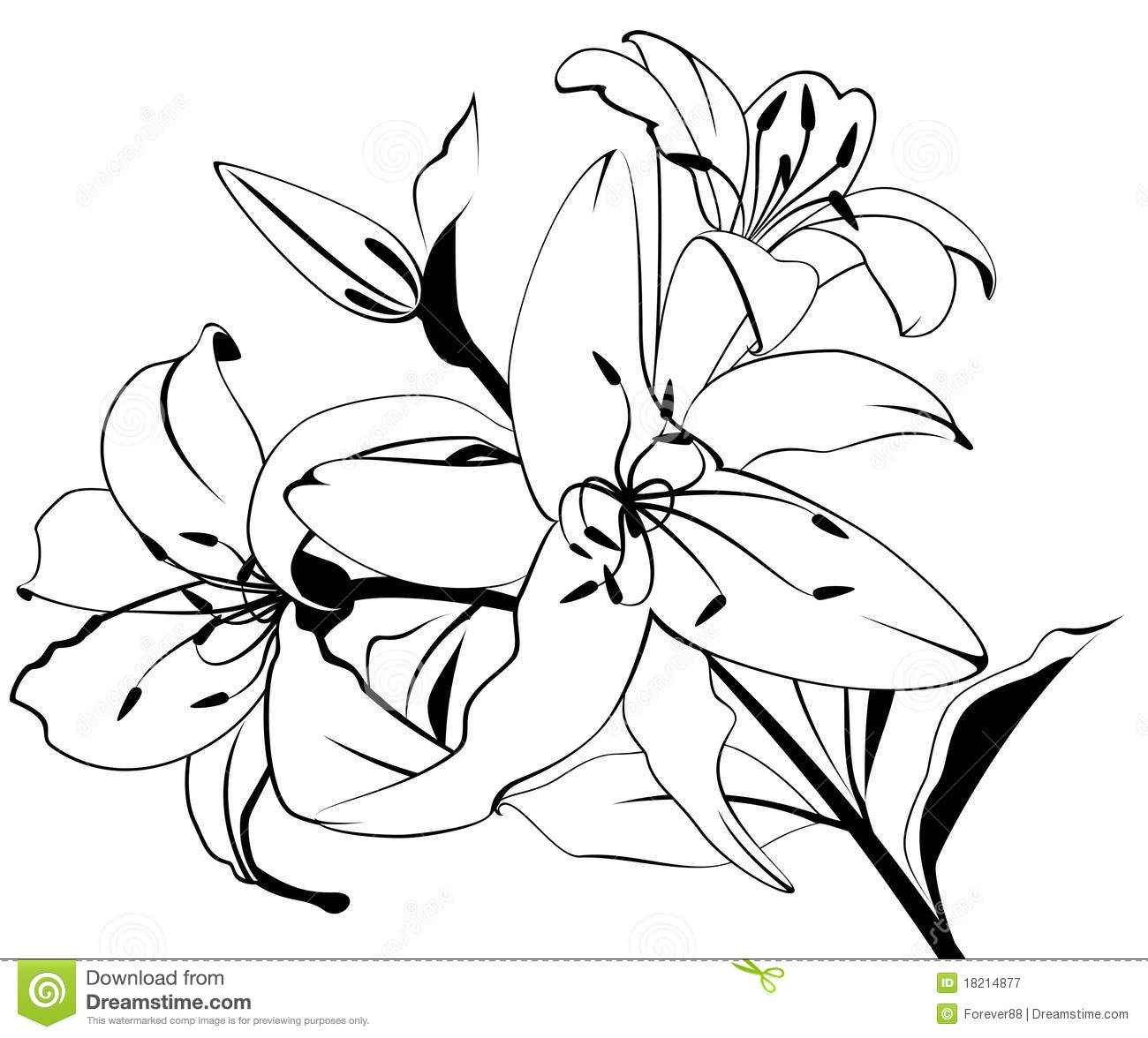 1300x1176 Exotic Tropical Flowers Drawing, Tropical Plant Drawings