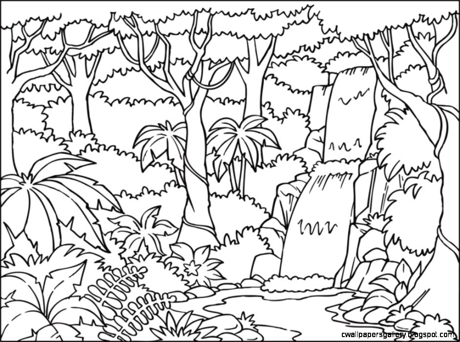 942x701 Rainforest Drawing Wallpapers Gallery