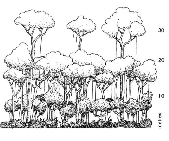 564x472 Rainforest Tree Drawing How To Draw A Canopy Image Gallery