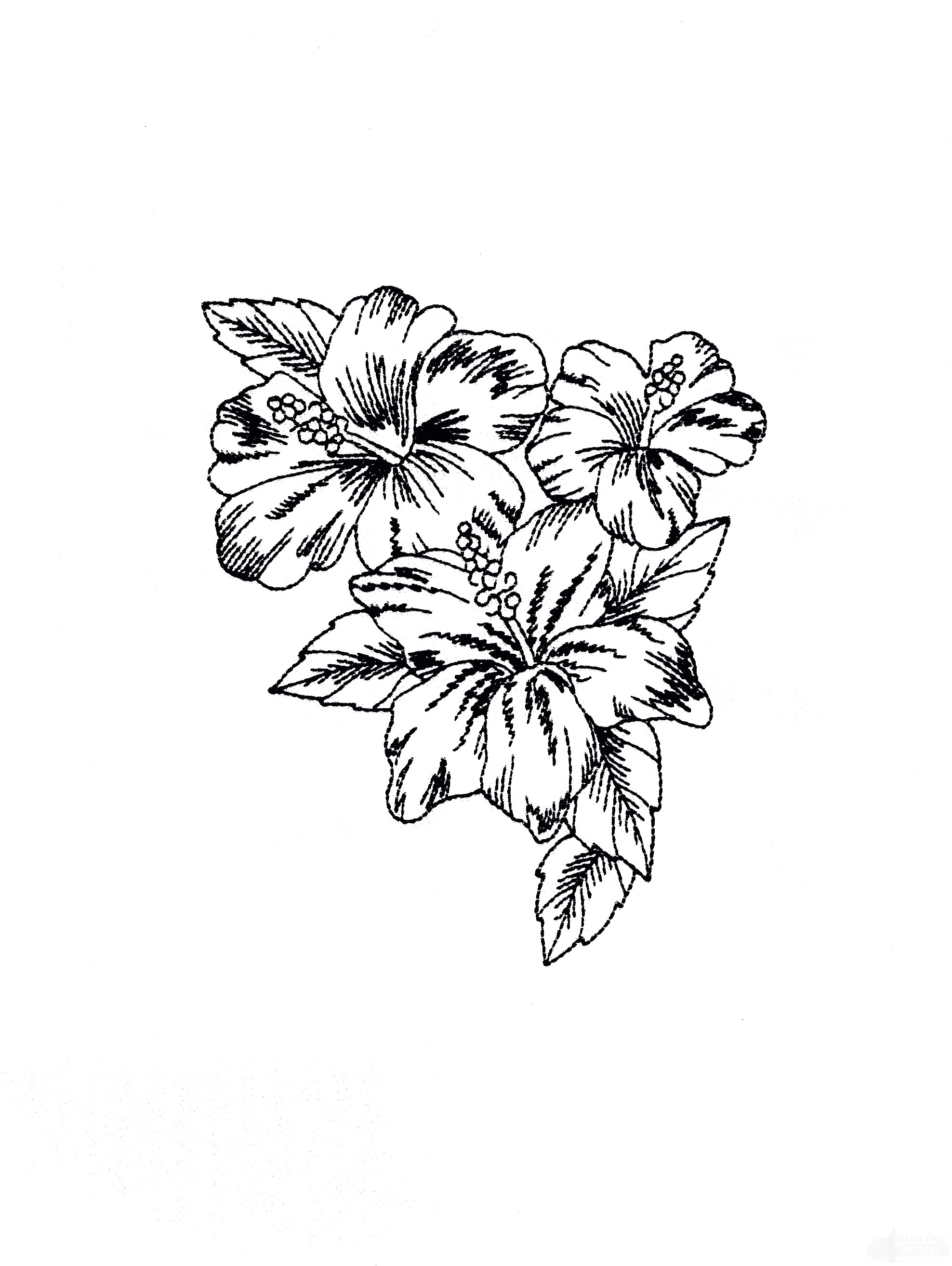 1976x2628 Tropical Floral Sketch Embroidery Design