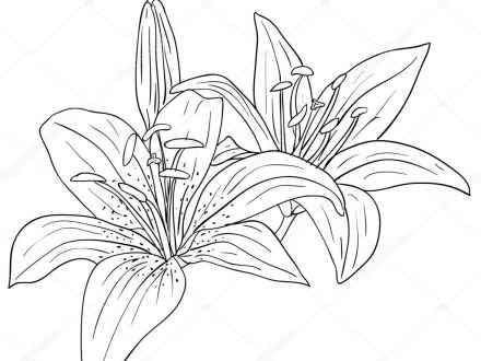 440x330 Tropical Flower Drawings Tropical Flower Drawings Tumblr