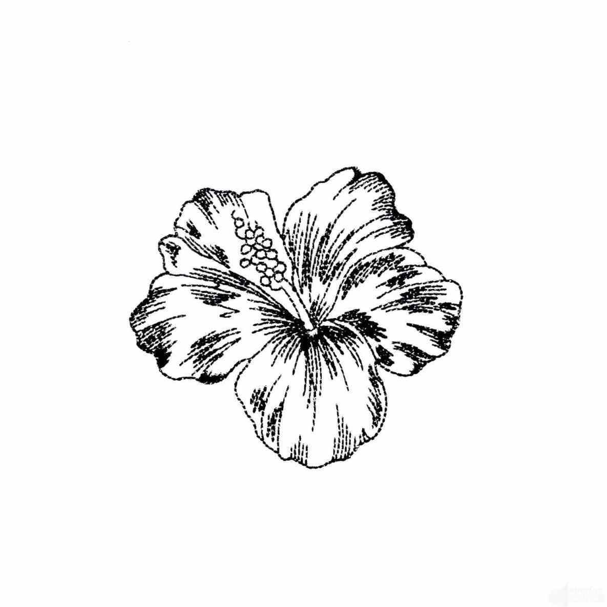 1185x1185 Tropical Flowers Drawing Flower Coloring Pages S Free