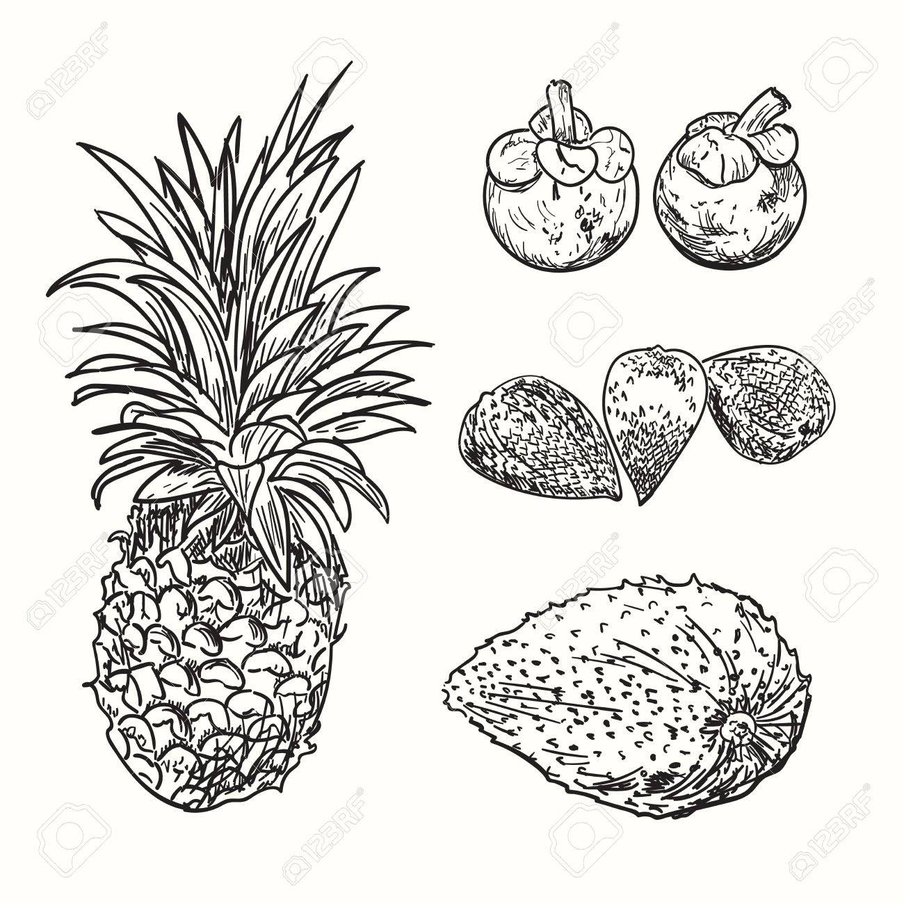 1300x1300 Tropical Fruits Sketch. Drawing Fruits Collection. Exotic Natural
