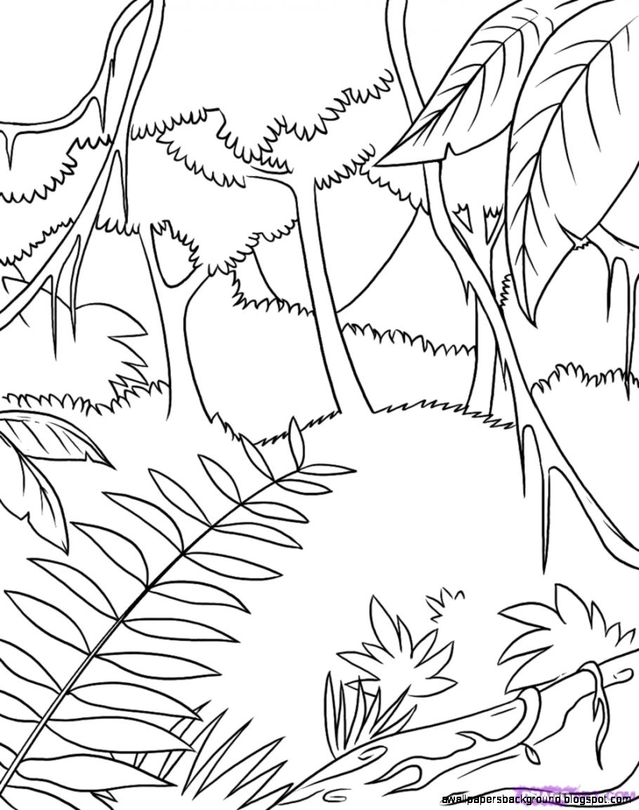 910x1154 Tropical Rainforest Drawing Wallpapers Background