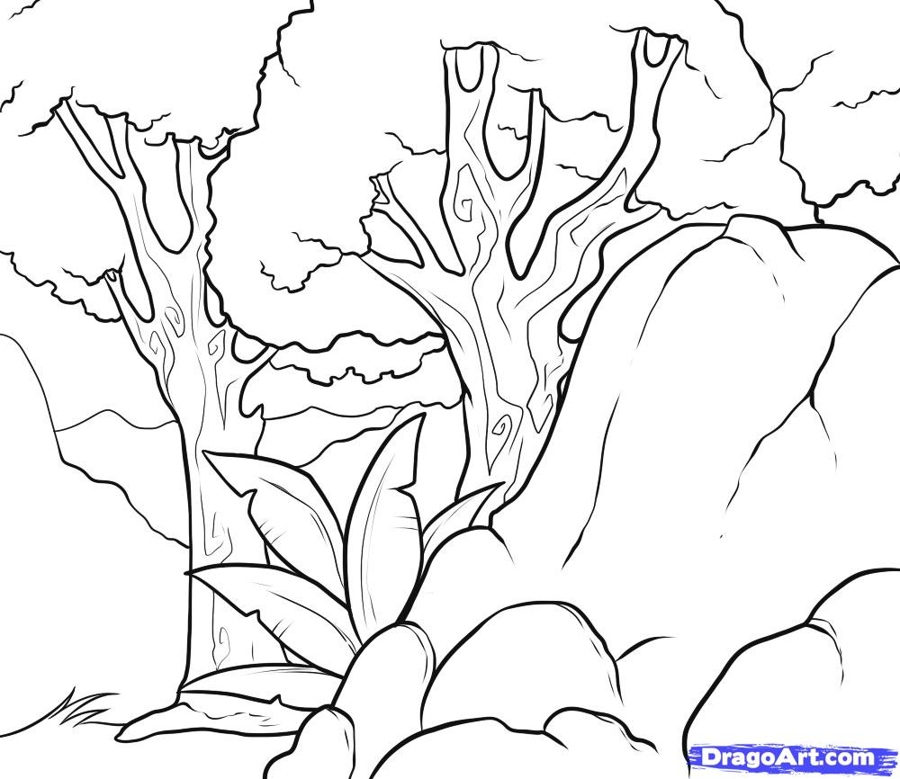 1000x866 Tropical Rainforest Drawing How To Draw A Background, Stepstep