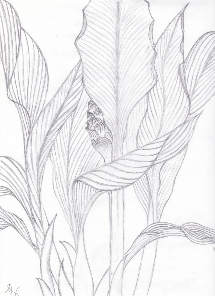 736x1010 Visualization Basics Tropical Leaves Contour Drawing From Life