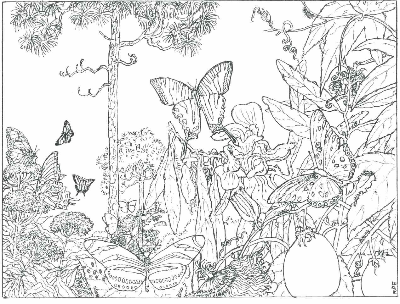1270x967 Coloring Rainforest Plants Coloring Pages Forest Page About