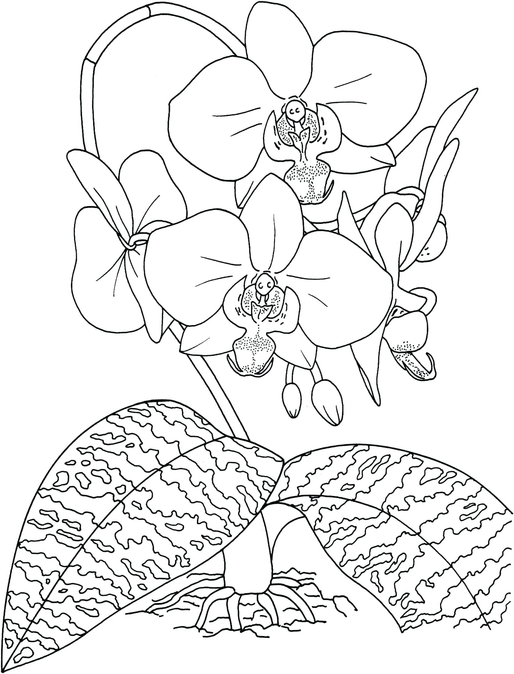 1701x2233 Coloring Rainforest Plants Coloring Pages Tropical Drawing