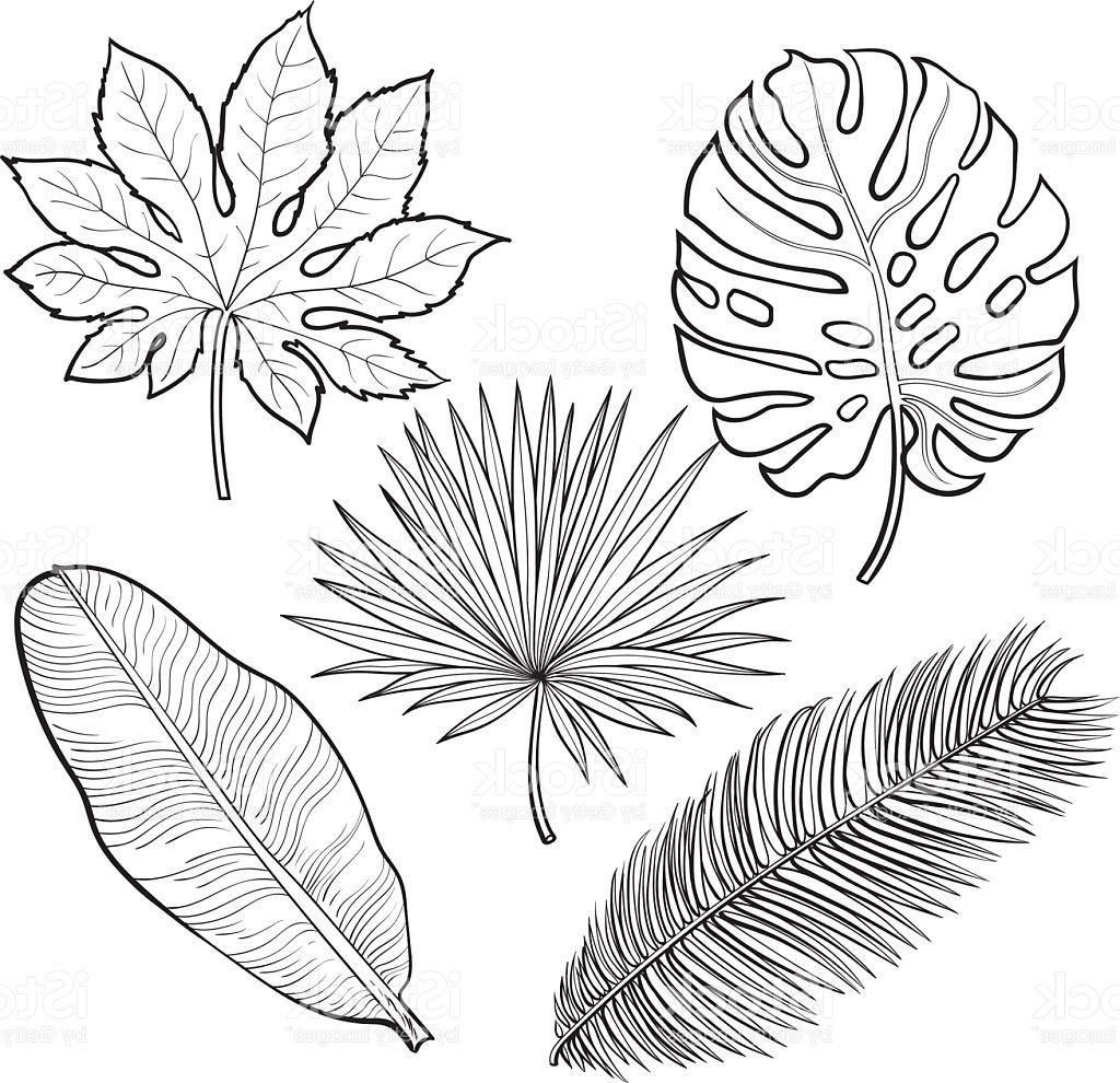 1024x990 Best Free Set Of Tropical Palm Leaves Sketch Style Vector