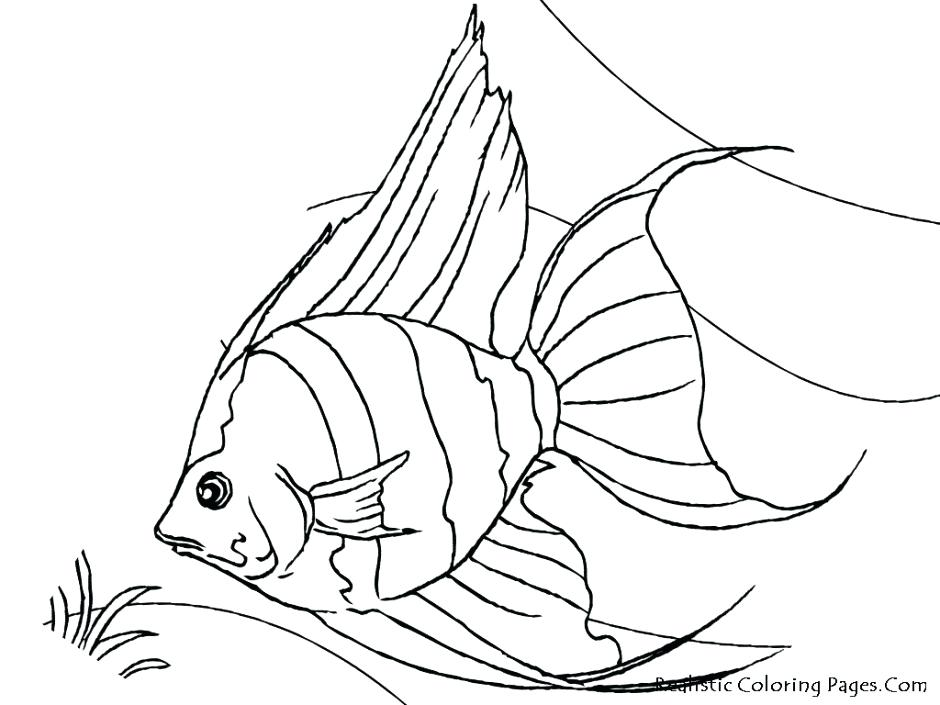 940x705 Realistic Fish Coloring Pages Tropical Fish Coloring Pages
