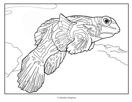450x348 Tropical Fish Coloring Book
