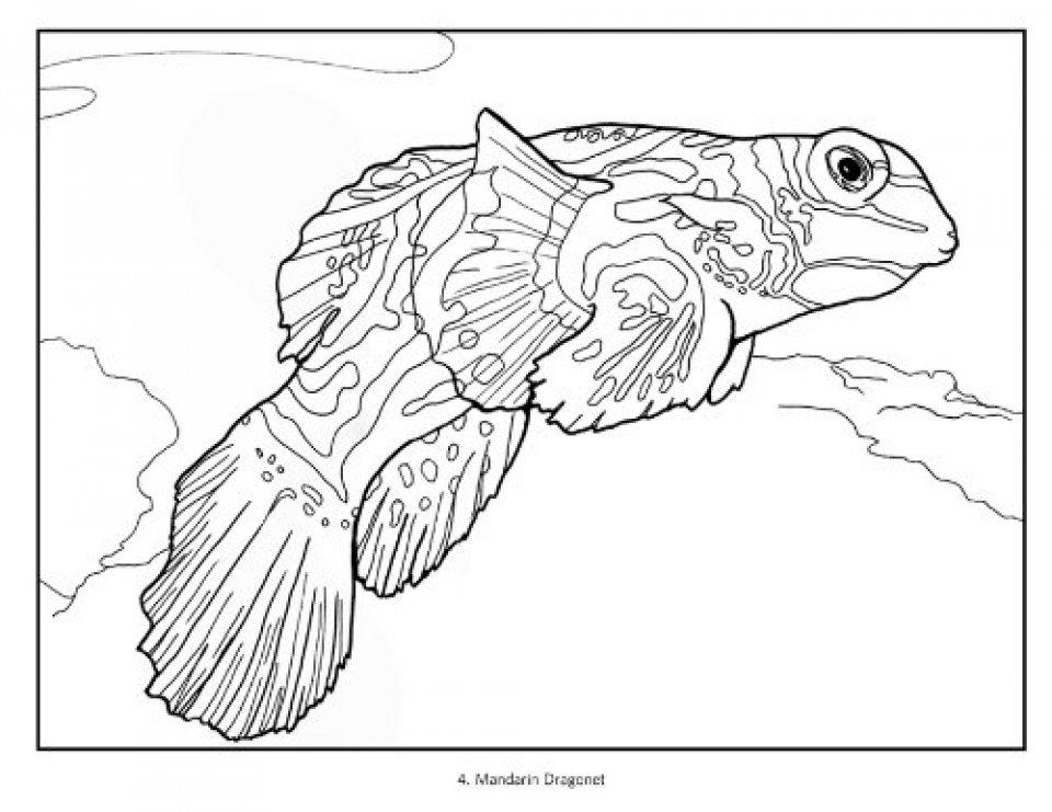 960x741 Tropical Fish Coloring Book Susan Koop, Alf Jacob Nilsen Nhbs