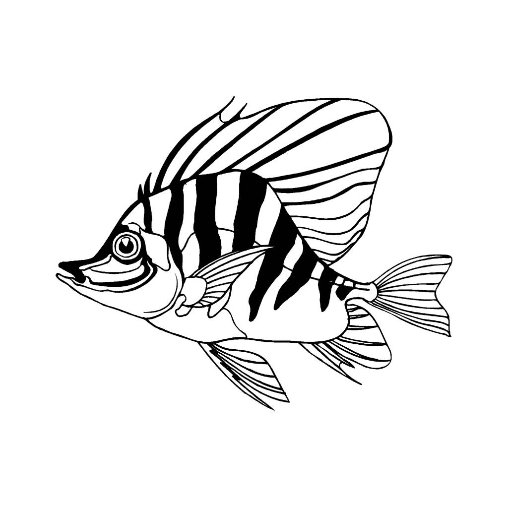 1024x1024 Best Photos Of Tropical Fish Drawings