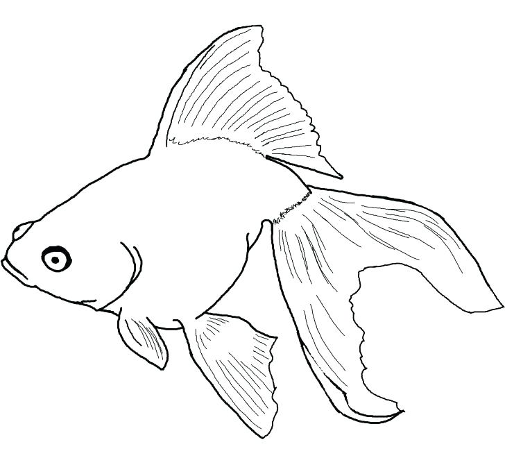 728x673 Tropical Fish Pictures To Color Picture Of A Fish To Color