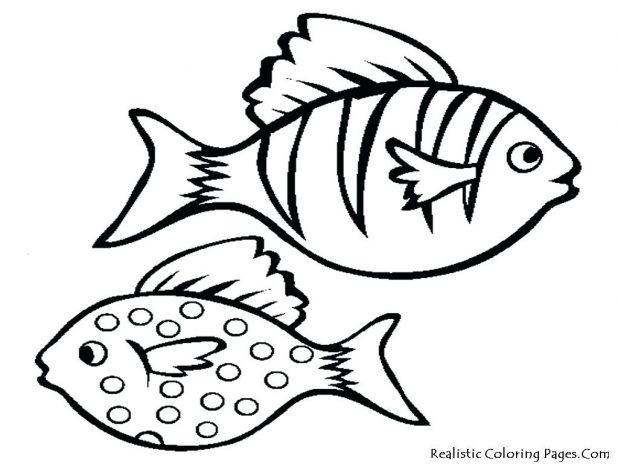 618x464 Cartoon Fish Drawings Free Printable Coloring Pages 16 Fascinating