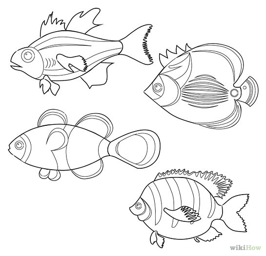 545x525 Tropical Fish Outline Drawing