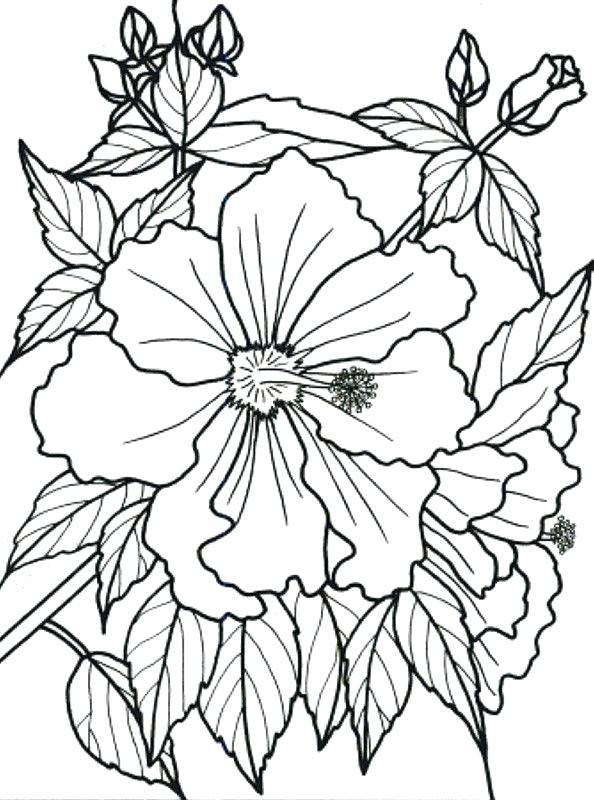 594x800 Color Book Flowers As Well Tropical Flower Coloring Pages To