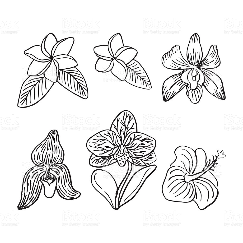 1024x1024 Drawn Orchid Tropical