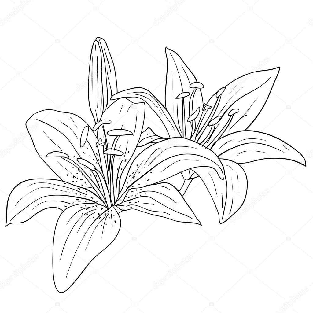1024x1024 Exotic Tropical Flowers Drawing, Tropical Plant Drawings