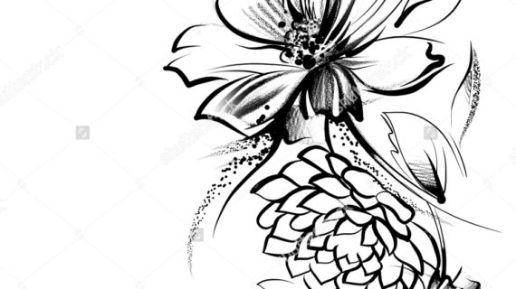 570x320 Floral Pencil Drawings Hand Drawn Tropical Flowers And Plants