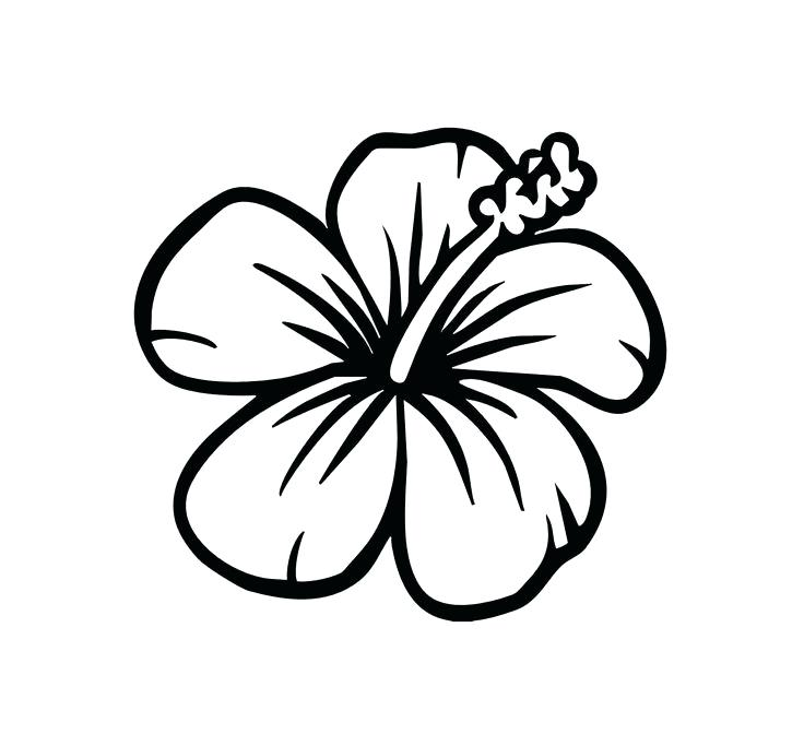 736x683 Hawaiian Flowers Coloring Pages Hibiscus Flower Coloring Pages
