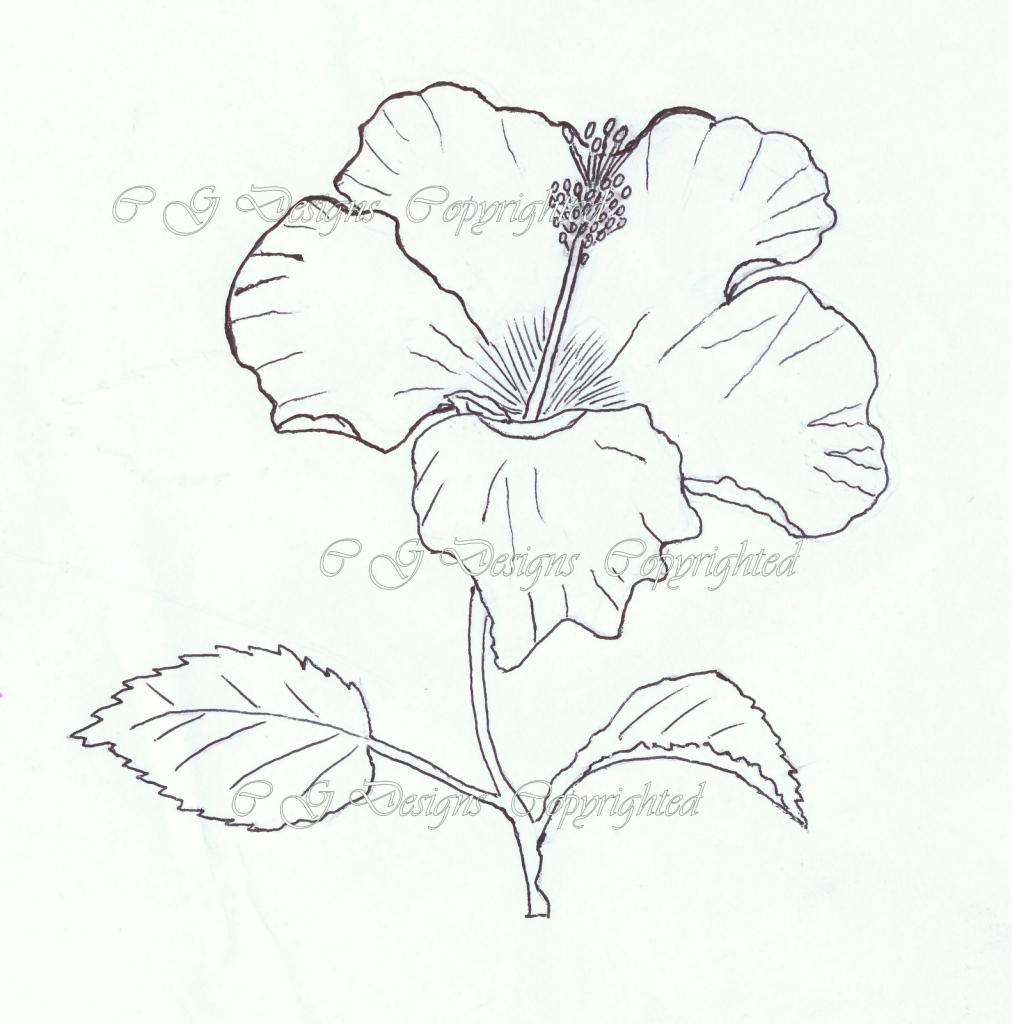 1012x1024 Hibiscus Plant Drawn Sketches Single Bright Red Hibiscus Tropical