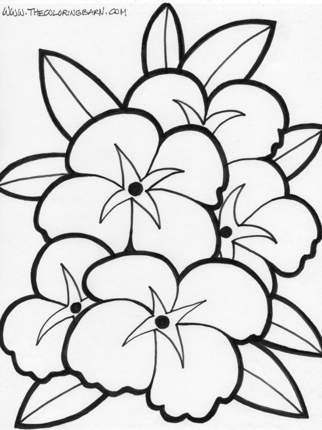 640x856 Tropical Flower Coloring Pages