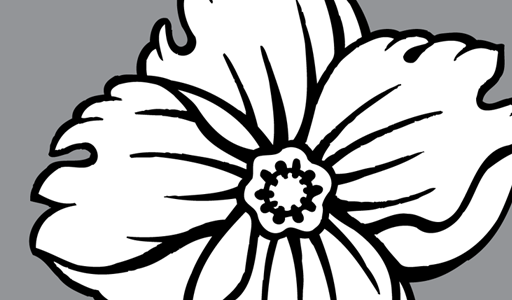 512x300 White Flower Clipart Tropical Flower
