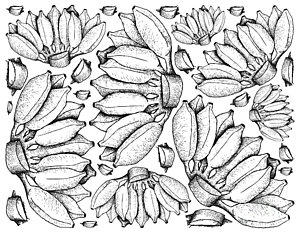 300x233 Tropical Island Drawings