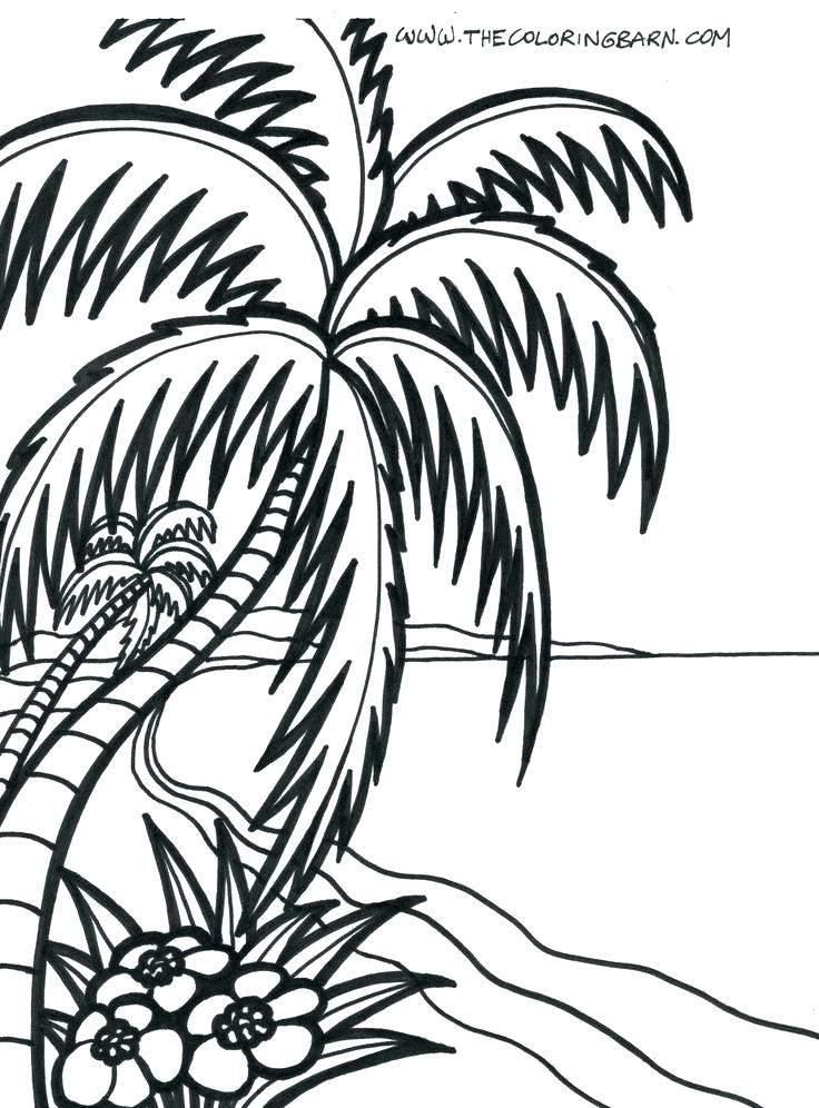 736x996 Tropical Coloring Pages