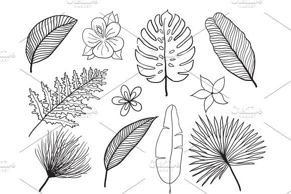 580x386 Hand Drawn Tropical Leaves Silhouette Vector Set. Set Leaf