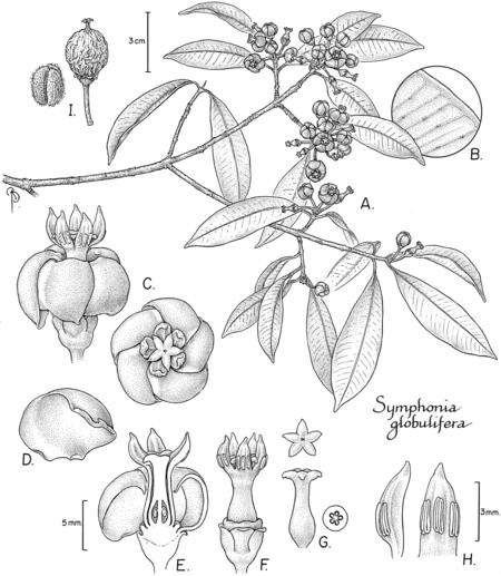 450x517 Scientific Illustration