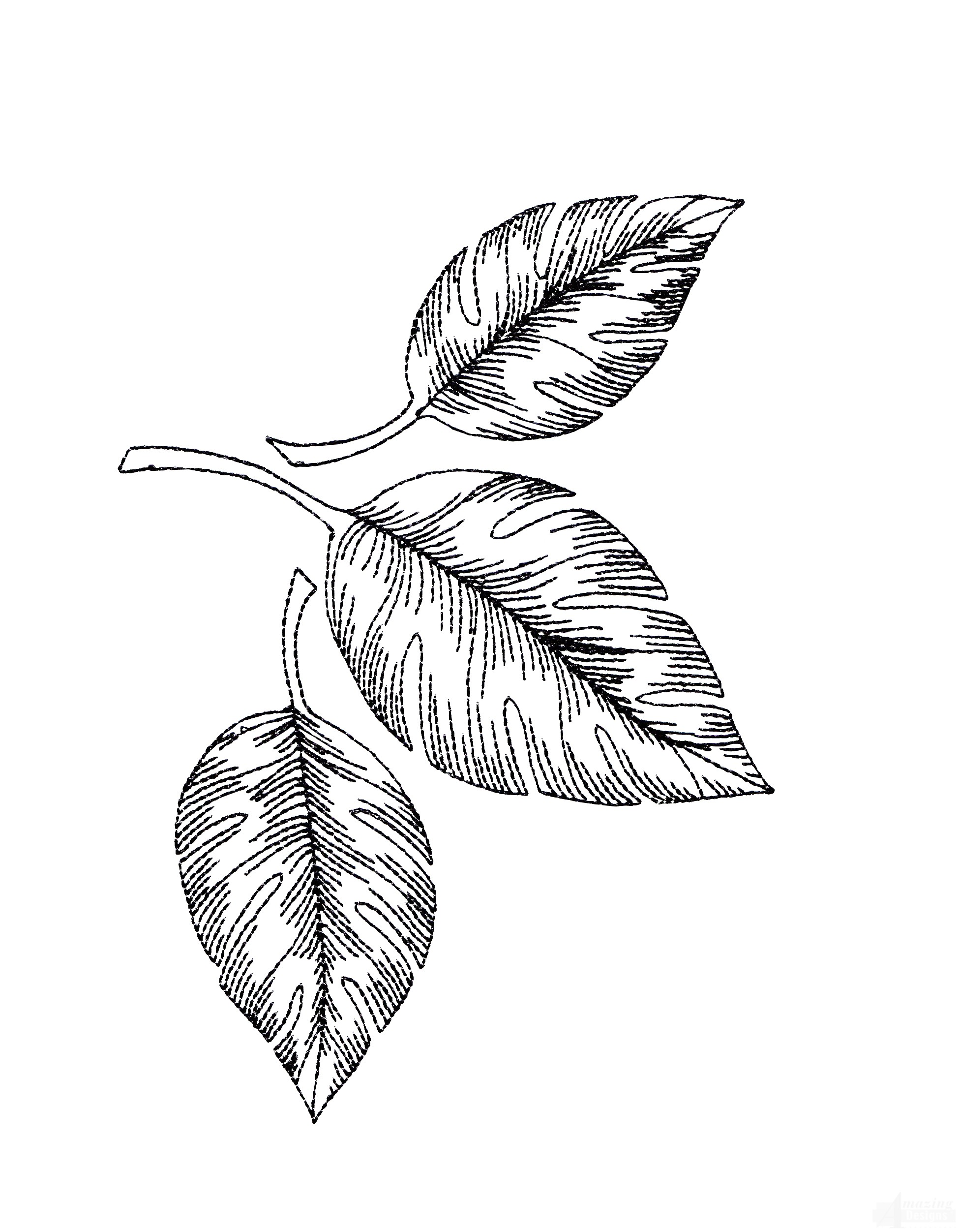 1950x2504 Tropical Floral Sketch Embroidery Design