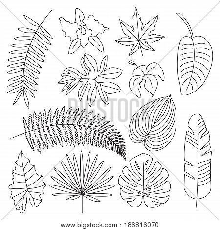 450x470 Tropical Leaves, Floral Elements, Vector Amp Photo Bigstock