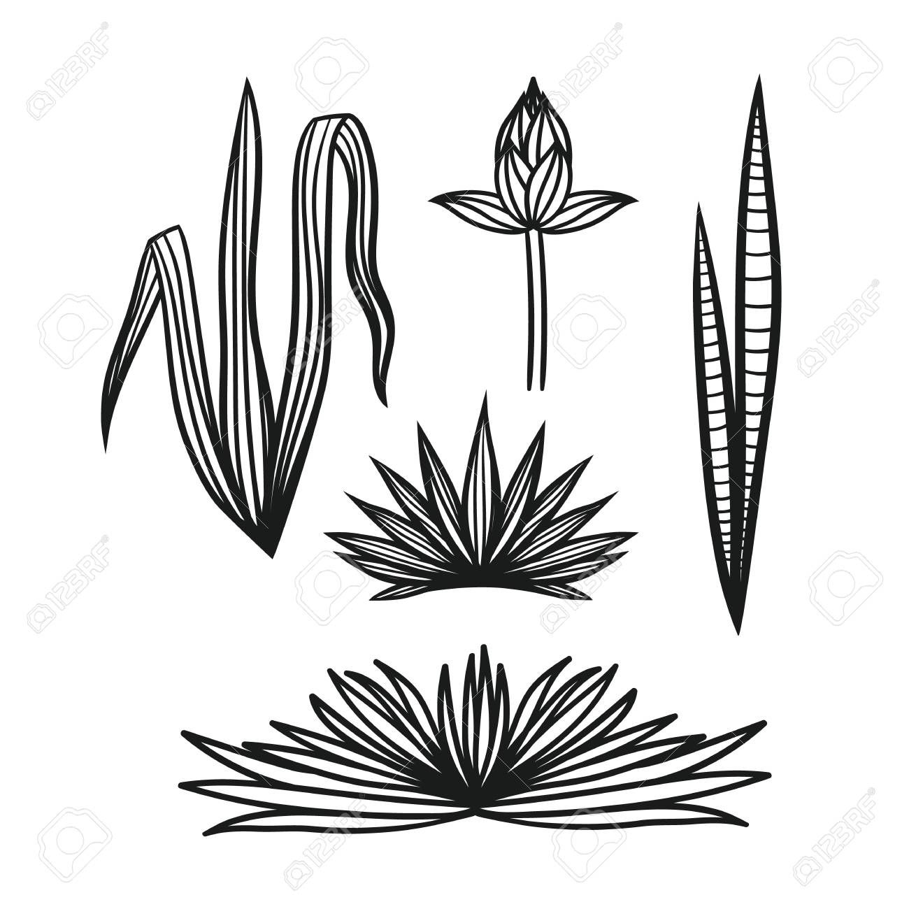 1300x1300 Vector Set Leaves Tropical Plants. Hand Drawing