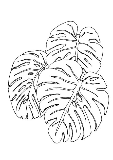458x647 Leaf Pattern Black And White