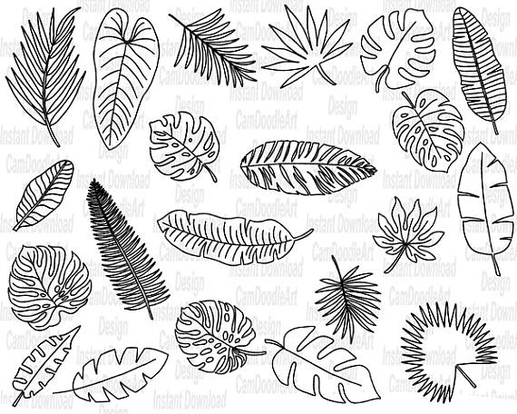 570x456 21 Doodle Tropical Leaves Vector Pack, Hand Drawn Doodle Clipart