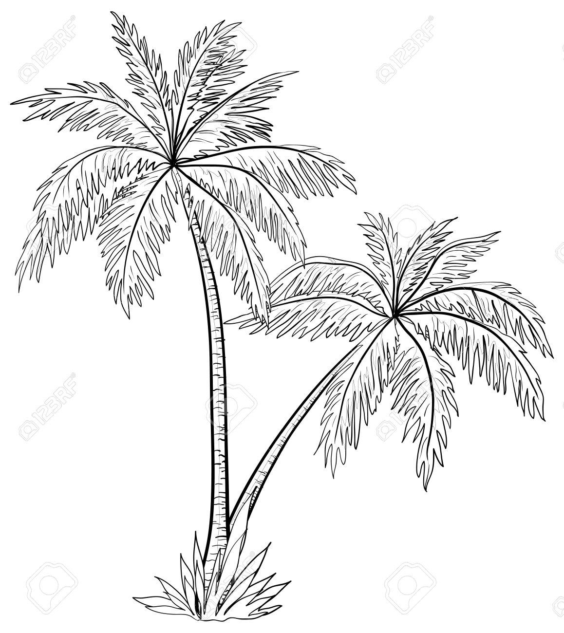 1158x1300 Drawn Palm Tree Black And White