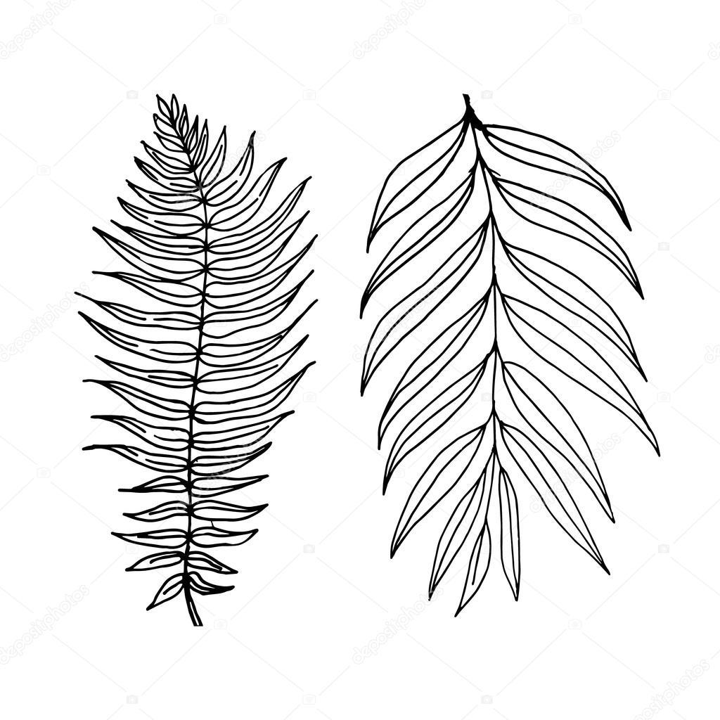 1024x1024 Fern And Palm Leaves Stock Vector Julija Grozyan
