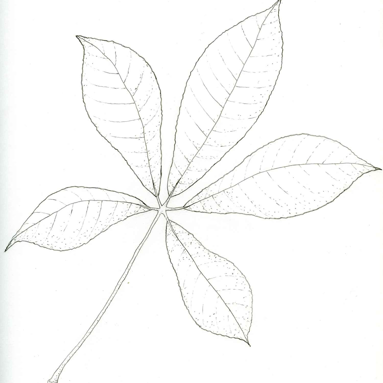 1500x1500 Flowers And Leaves Drawings, Tropical Plant Drawings