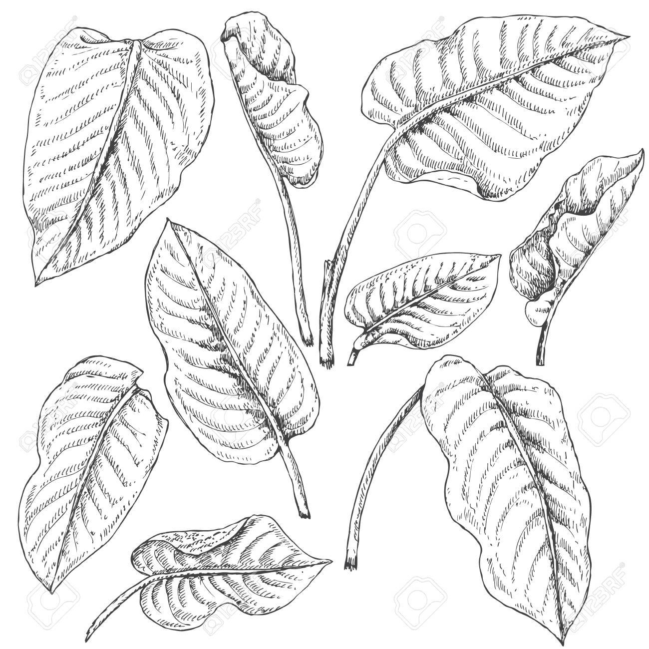 1300x1300 Hand Drawn Branches And Leaves Of Tropical Plants. Dieffenbachia