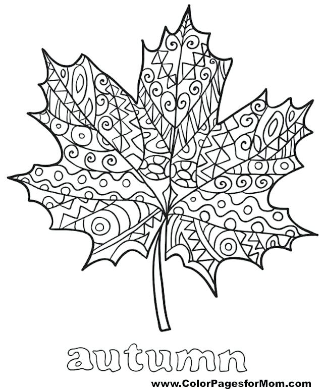 640x771 Leaf Coloring Pages Printable Palm Leaves Shapes Kids Drawing