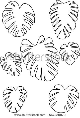 319x470 Outline Drawing Monstera Leaves. Tropical Plant. Abstrakt